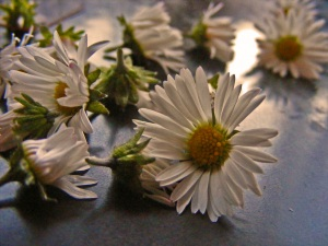 Jag är tacksam för sommarens vackra blommor, de finns kvar på min näthinna.